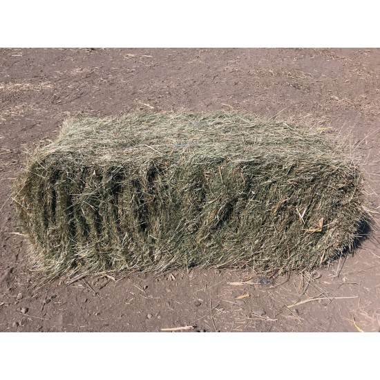 Conventional Bale Hay